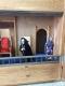 Спектакль Цар Ірад! Ивенецкий музей традиционной культуры. г. Ивенец, 2017 г.